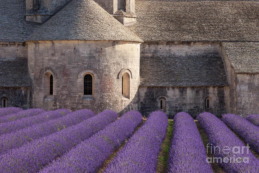 Lavender at Abbaye de Senanque by Brian Jannsen
