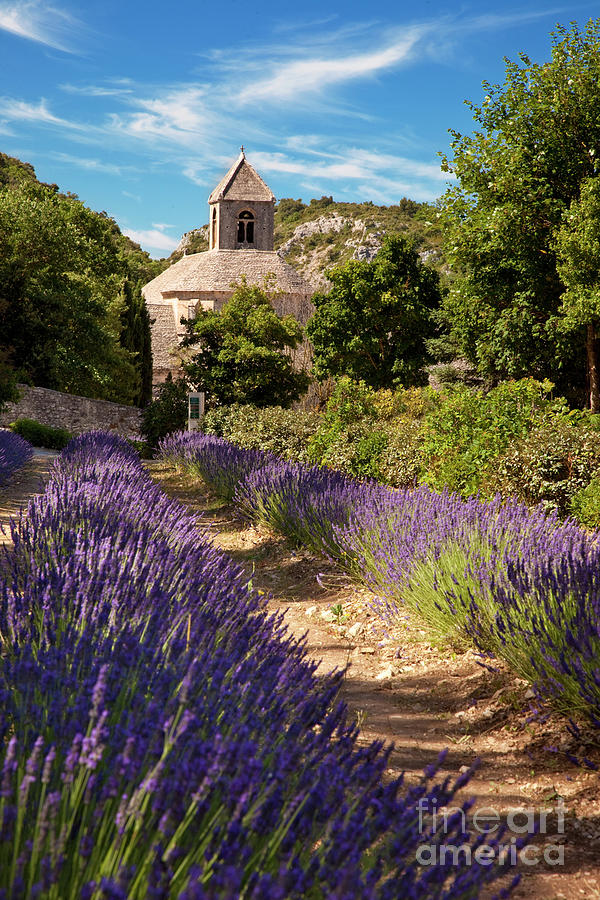 Lavender at Senanque by Brian Jannsen