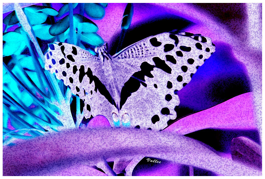 Butterfly Digital Art - Lavender Butterfly by Vallee Johnson