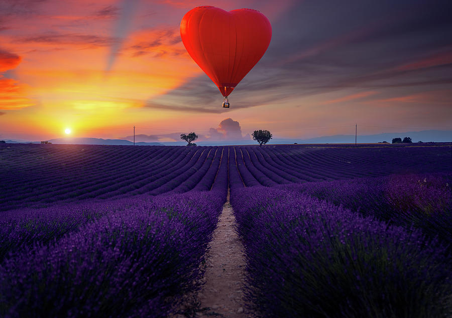 Lavender field and hot air balloon by Anek Suwannaphoom