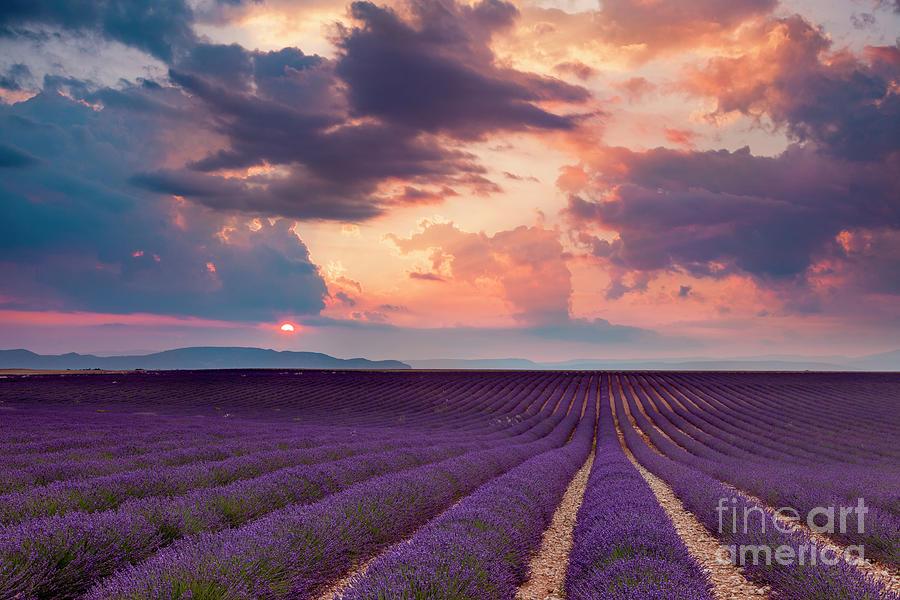 Lavender Field at Sunset by Brian Jannsen