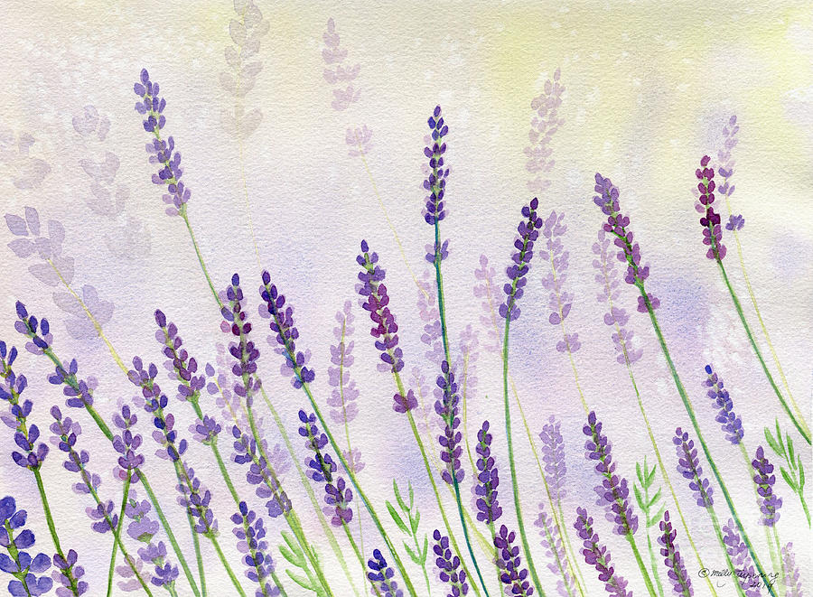 Lavender Flowers Watercolor Painting By Melly Terpening