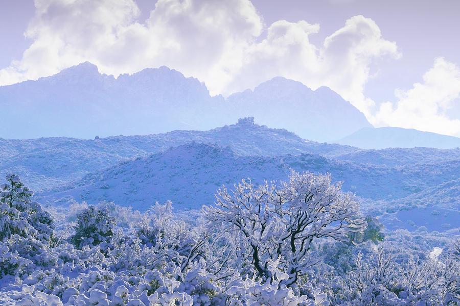 Lavender Light on Four Peaks  by Veronika Countryman