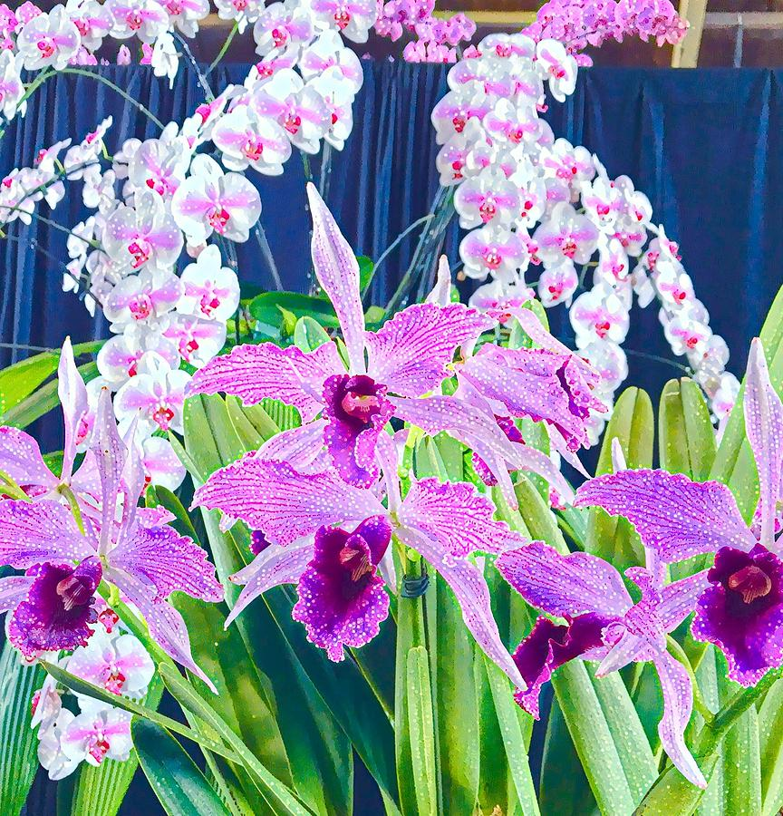 Lavender  Orchid Aloha  by Joalene Young