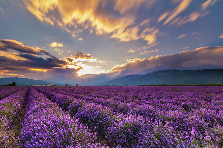 Lavender Sun by Evgeni Dinev