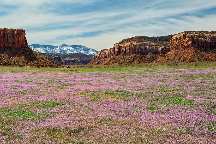Lavender Valley by Denise Bush