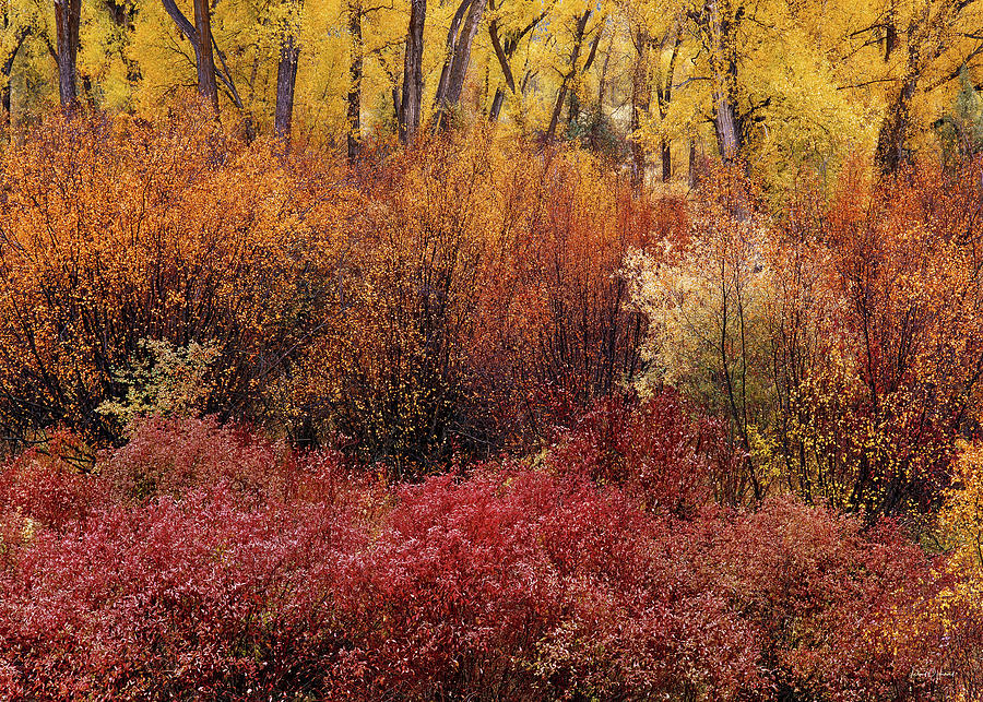 Autumn Photograph - Layers Of Color by Leland D Howard