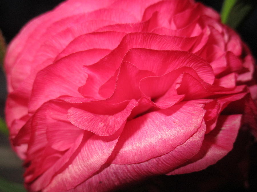 Layers of pink by Rosita Larsson