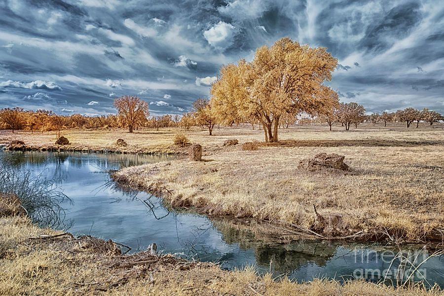 Lazy Branch Of The Pedernales Infrared Photograph