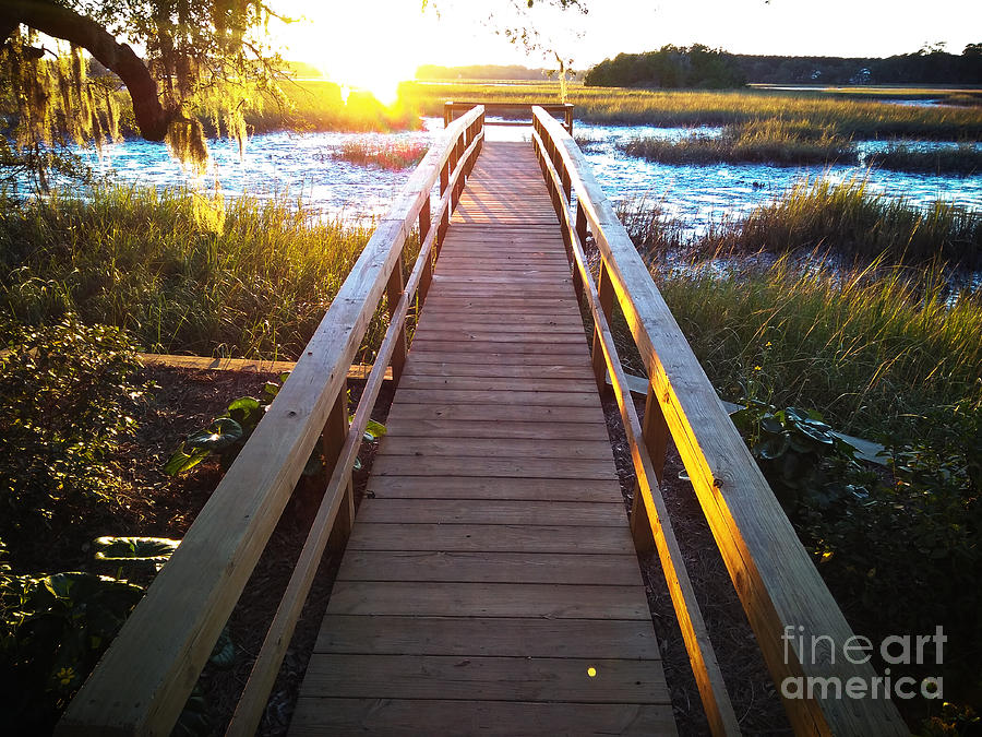 Johns Island Photograph - Lead Me To The Light by Robert Knight