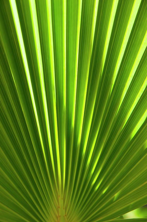 Leaf Photograph - Leaf by Anna Kluba