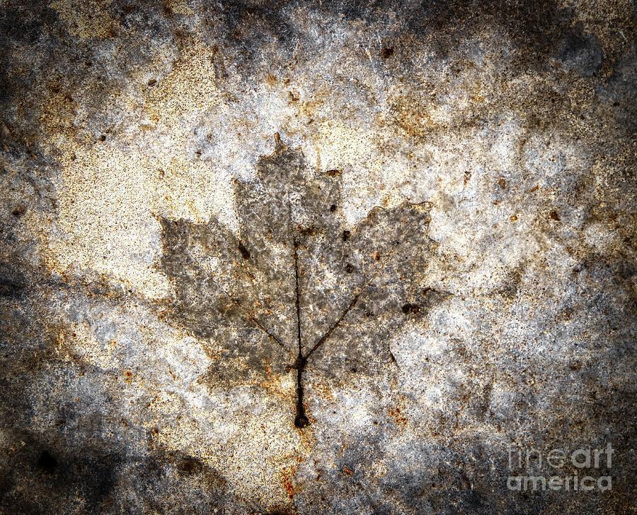 Leaf imprint by Jim Lepard
