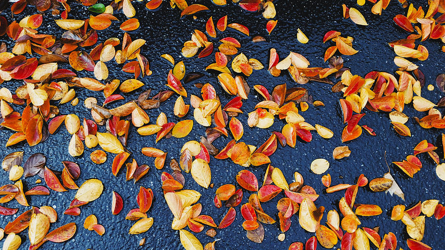 Leaf Littering Parking Lot  by Ally White