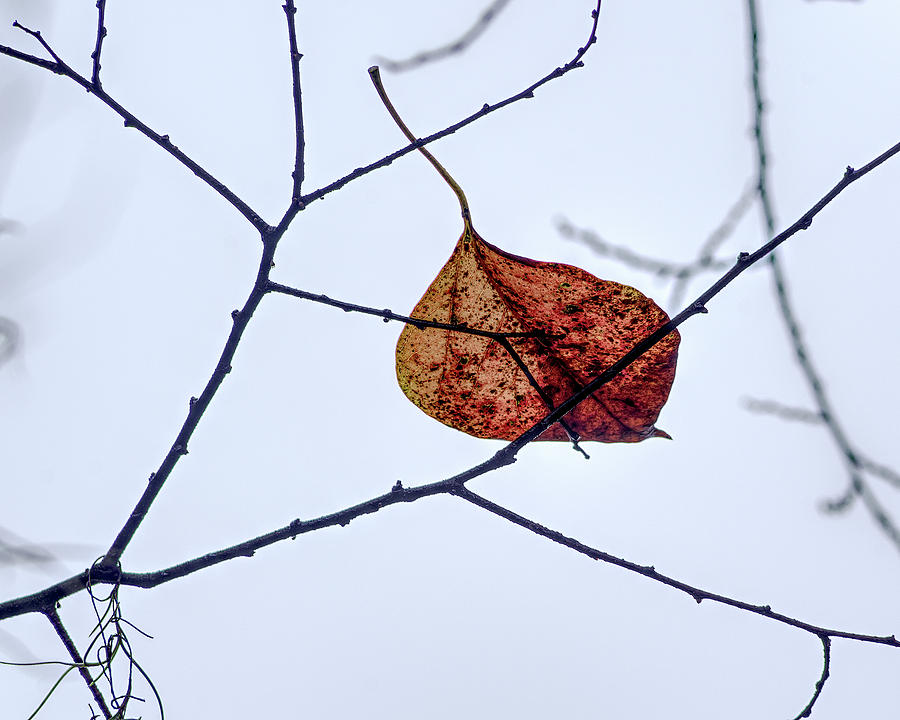 Leaf on Branch by Richard Rizzo