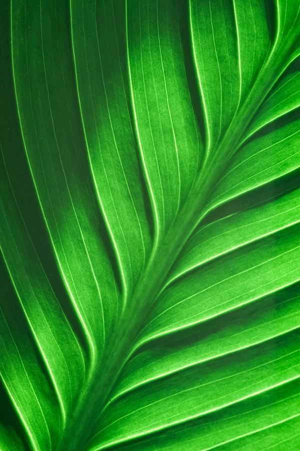 Leaf Pattern by Eric Full