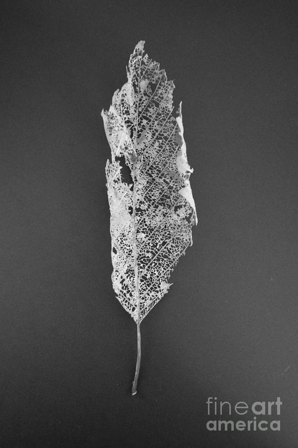 Leaf Skeleton Red Filter by Jeni Gray