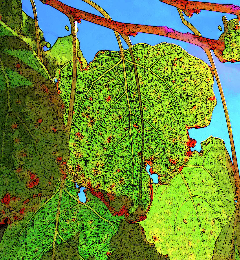 Tree Leaves Photograph - Leafs 3 by Bruce IORIO