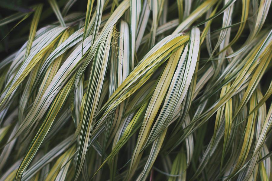Botanicals Photograph - Leafy IIi by Elizabeth Urquhart