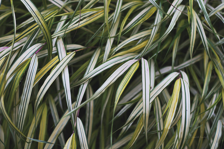 Botanicals Photograph - Leafy Iv by Elizabeth Urquhart