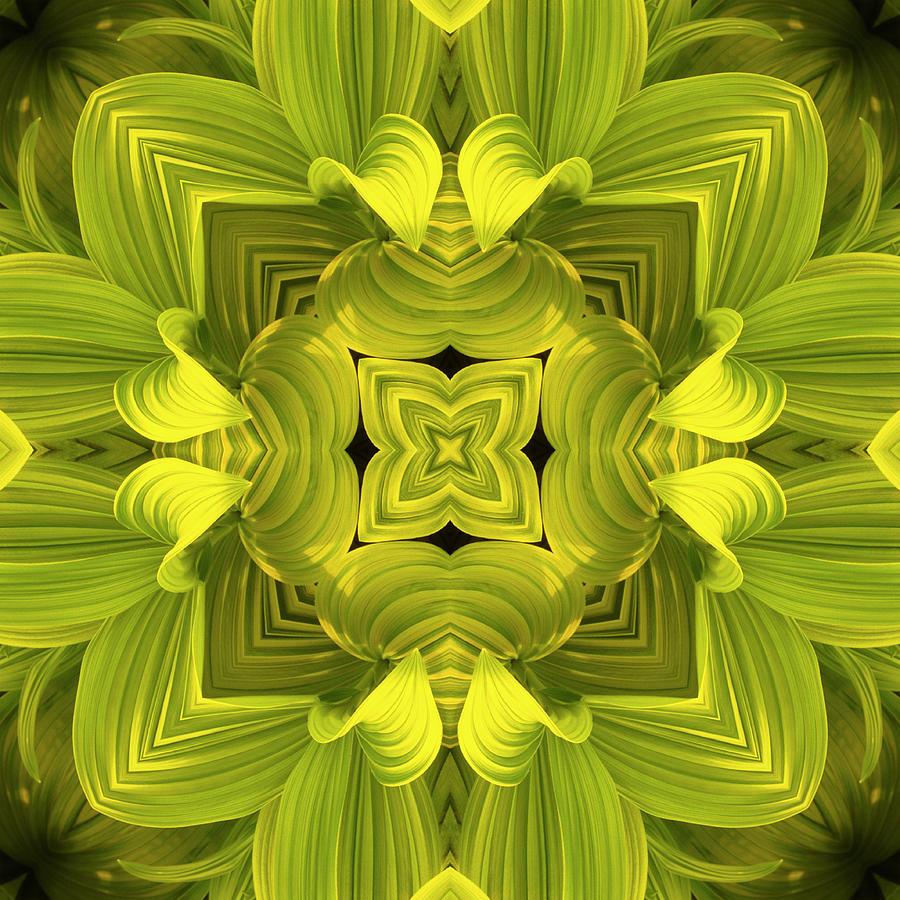 Leafy Mandala Photograph by Steve Satushek