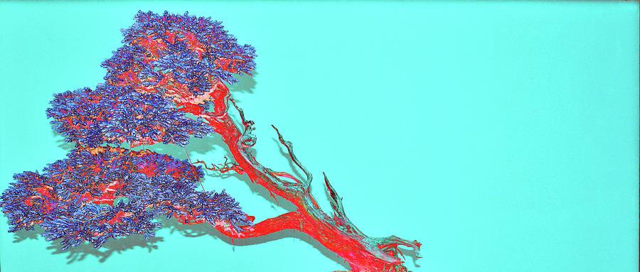 Bonsai Digital Art - Leaning Red Bonsai Tree by Tom Kelly
