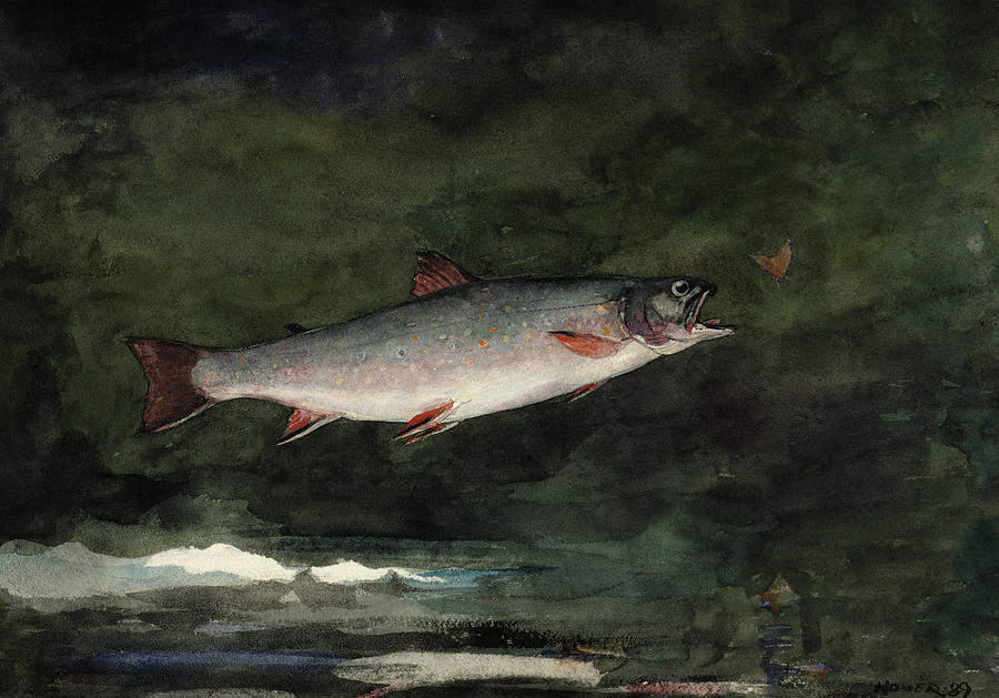 Winslow Homer Painting - Leaping Trout, 1889 by Winslow Homer