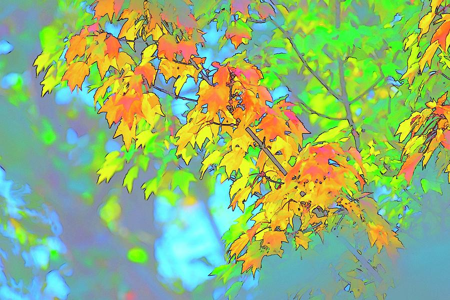 Leaves Color Sketch by Jerry Sodorff