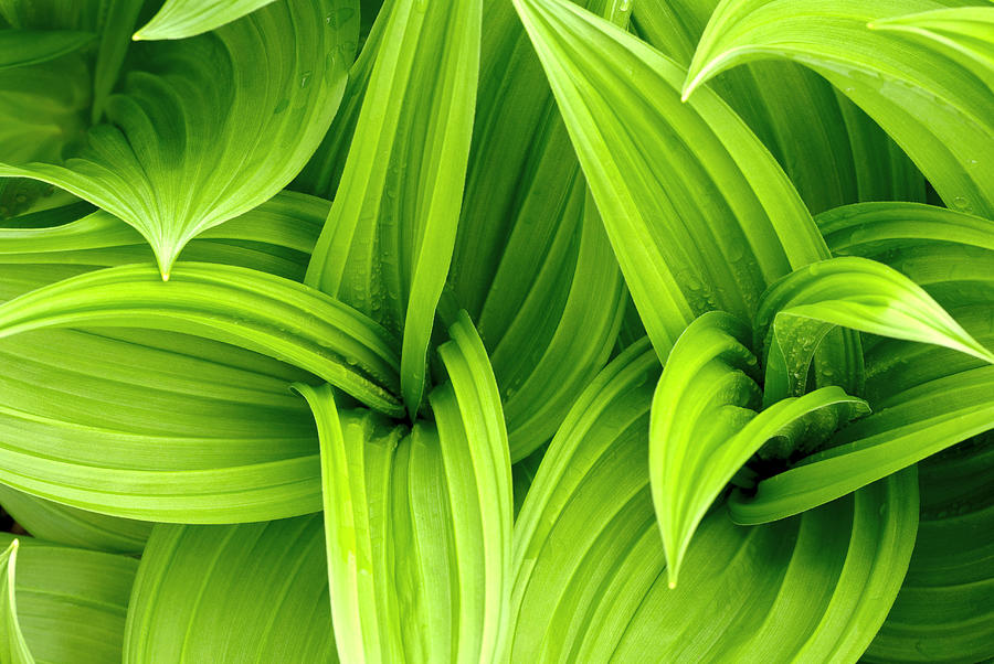 Leaves Drops Green Photograph by Vladimirovic