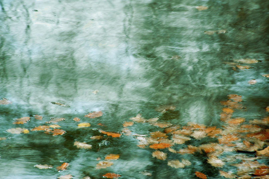 leaves in a lake by Jerry Daniel