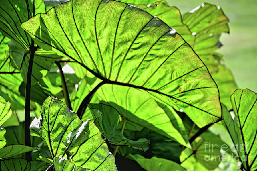 Leaves in Light by Diana Mary Sharpton