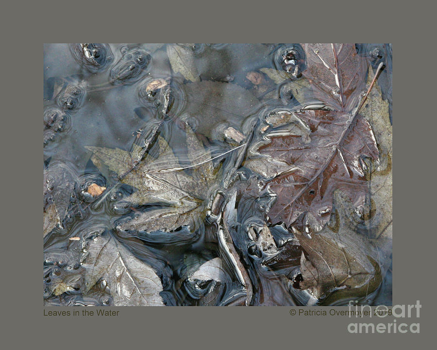 Leaves in the Water by Patricia Overmoyer