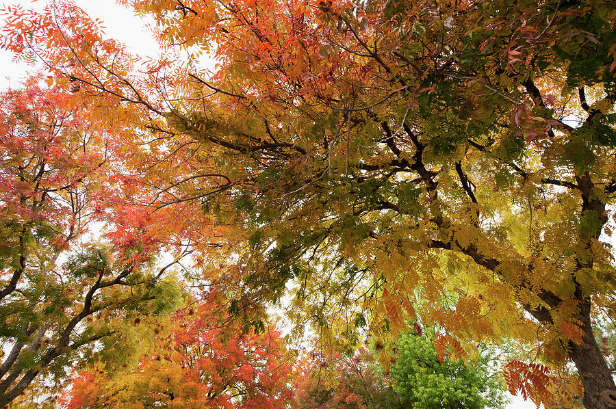 Leaves Of Trees Changing Colors With Photograph by Setareh Vatan / Design Pics