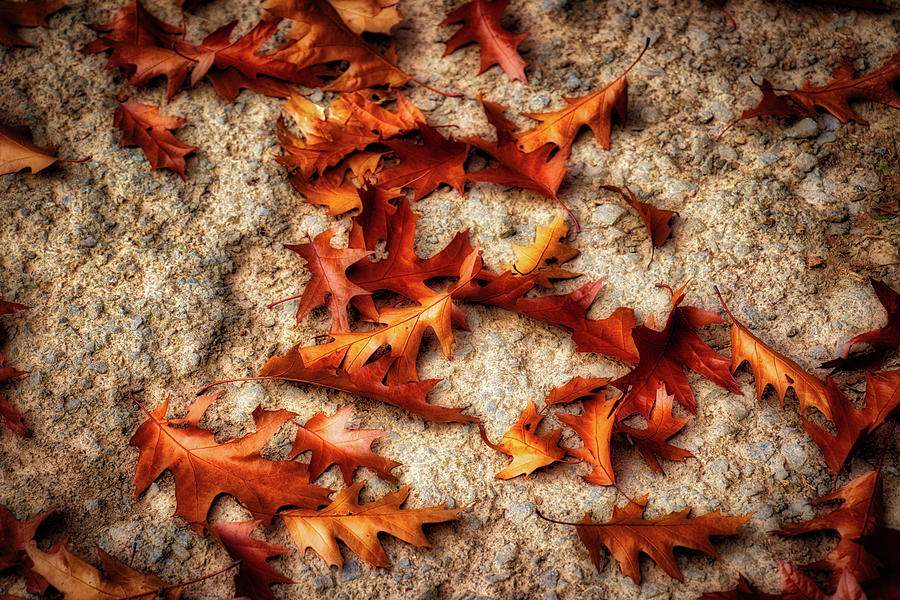 Leaves on Concrete by Gavin Bates