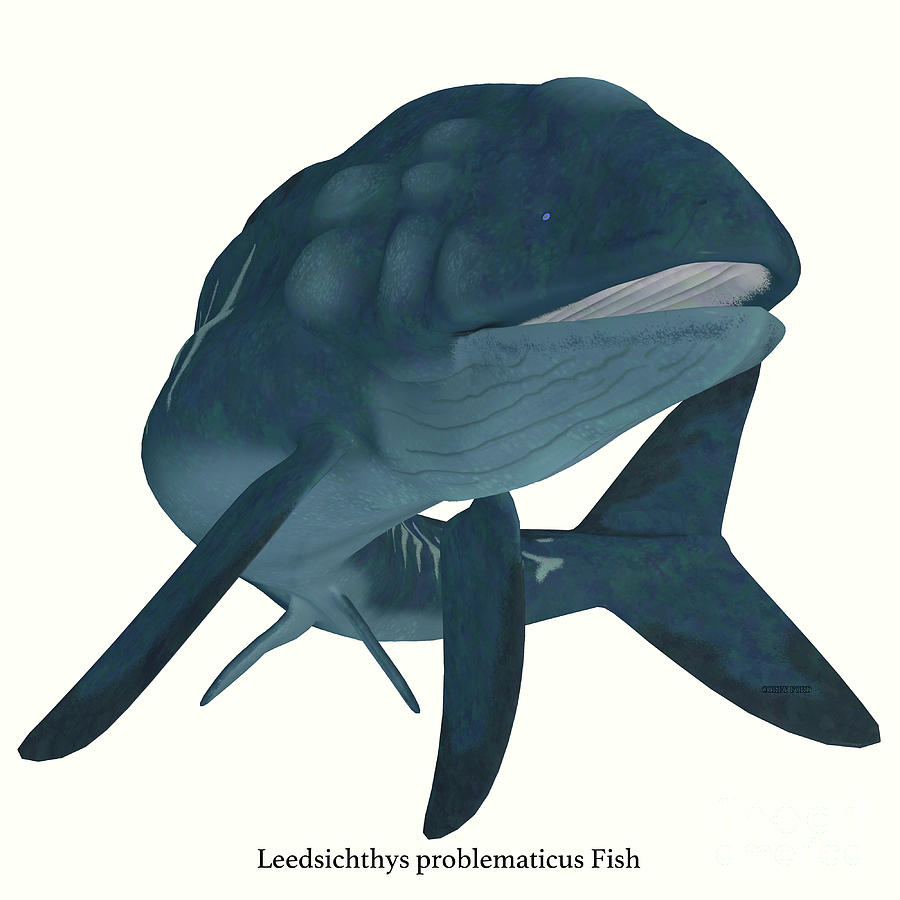 Leedsichthys Fish Head With Font Digital Art By Corey Ford