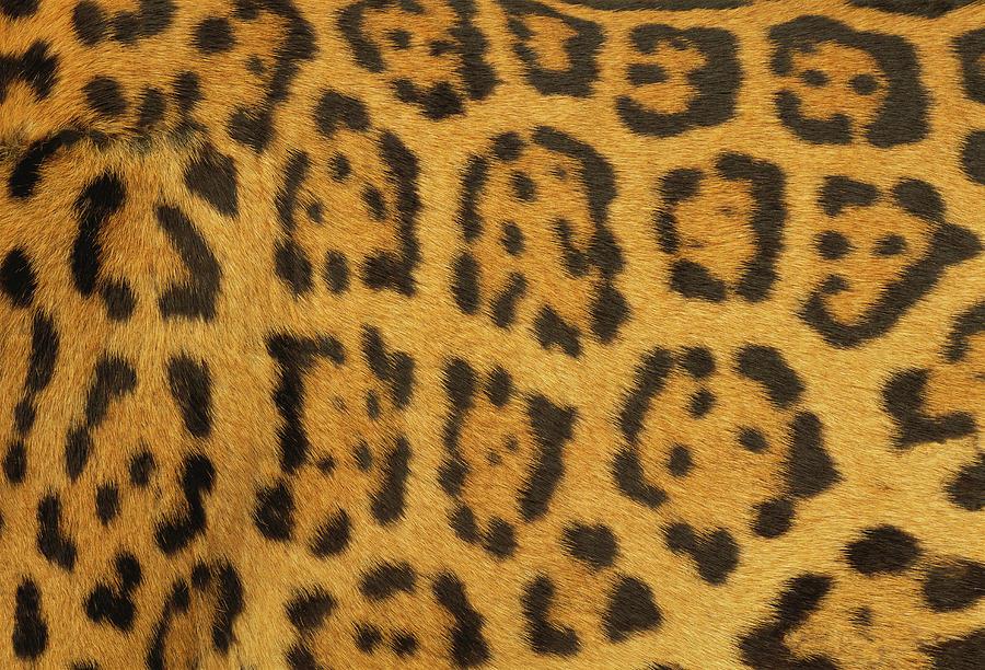 Leopard Fur Photograph by Siede Preis