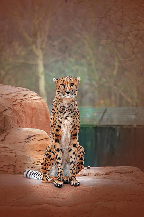 Leopard  by Gouzel -