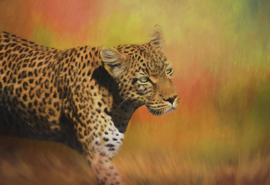 Africa Photograph - Leopard On The Prowl by Kay Kochenderfer