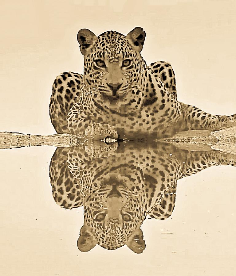 Leopard Reflection by Gini Moore