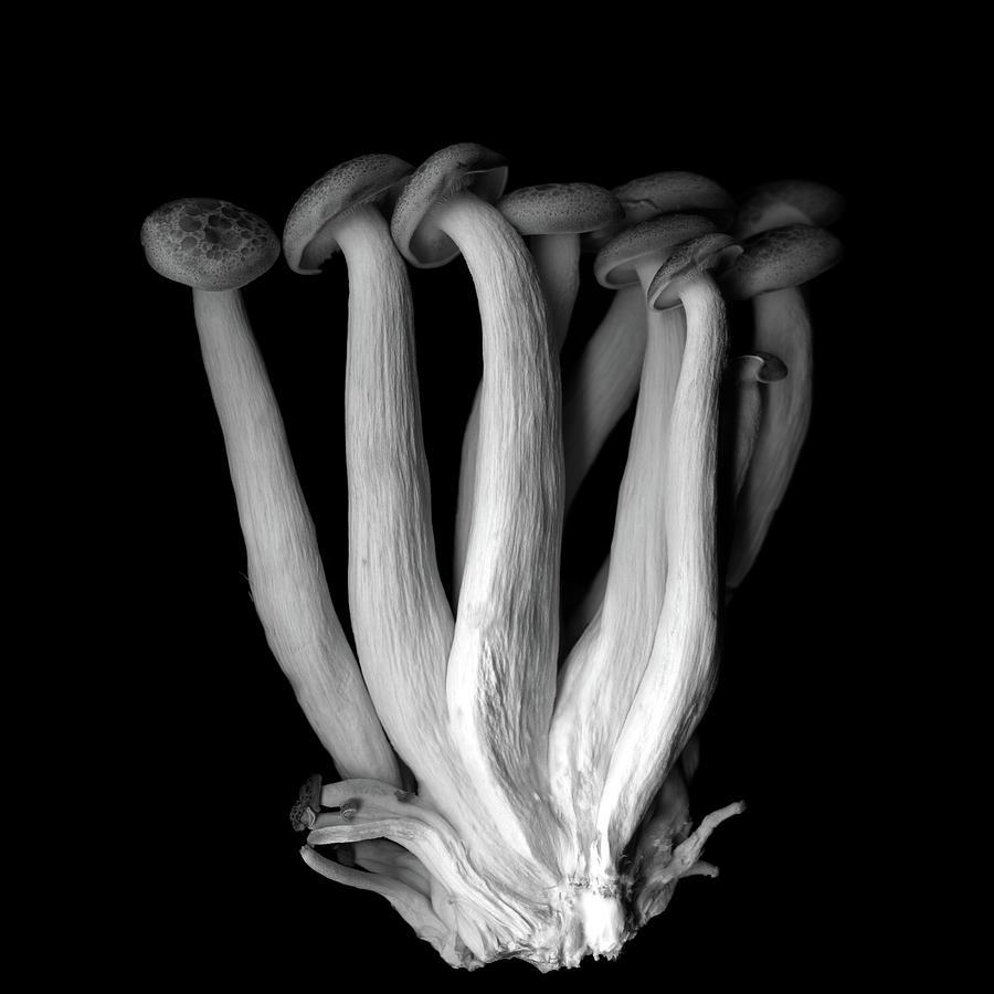Les Pleureuses En Deuil B&w Photograph by Photograph By Magda Indigo