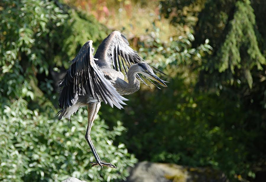 Levitation by Fraida Gutovich