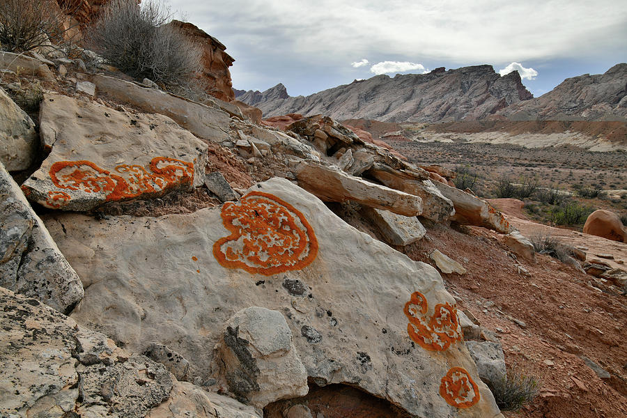 Lichen Art along County Road 1028 in Utah by Ray Mathis