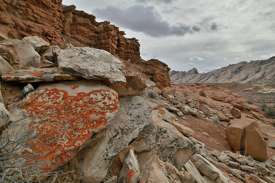 Lichen Covered Boulders along County Road 1028 in Utah by Ray Mathis