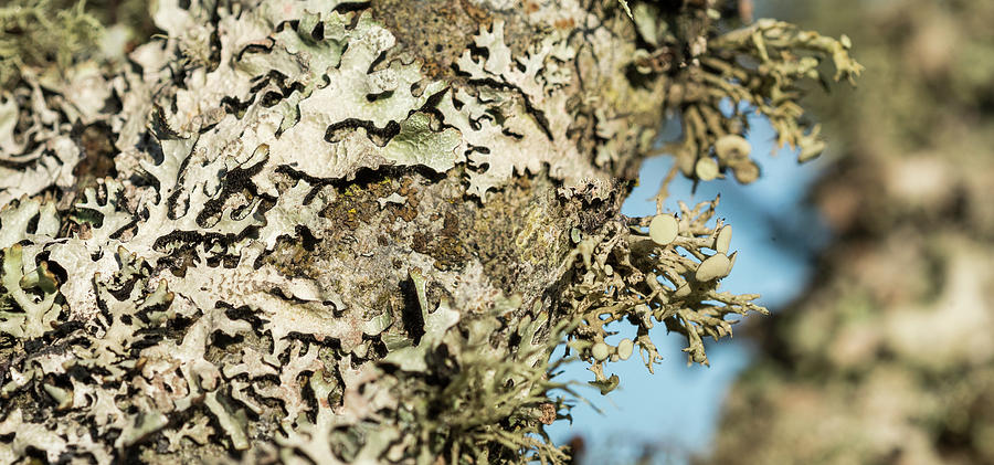 Lichens on a Tree Trunk by Robert Potts