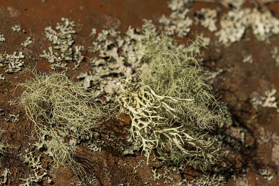 Lichens on Iron by Robert Potts