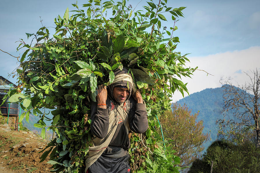 Life in Nepal by Lindley Johnson
