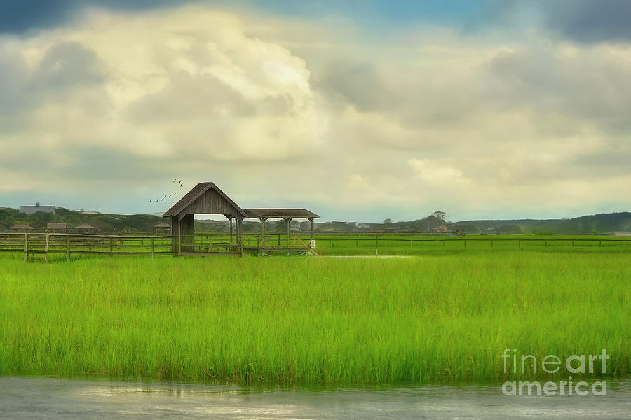 Life In The Low Country by Kathy Baccari