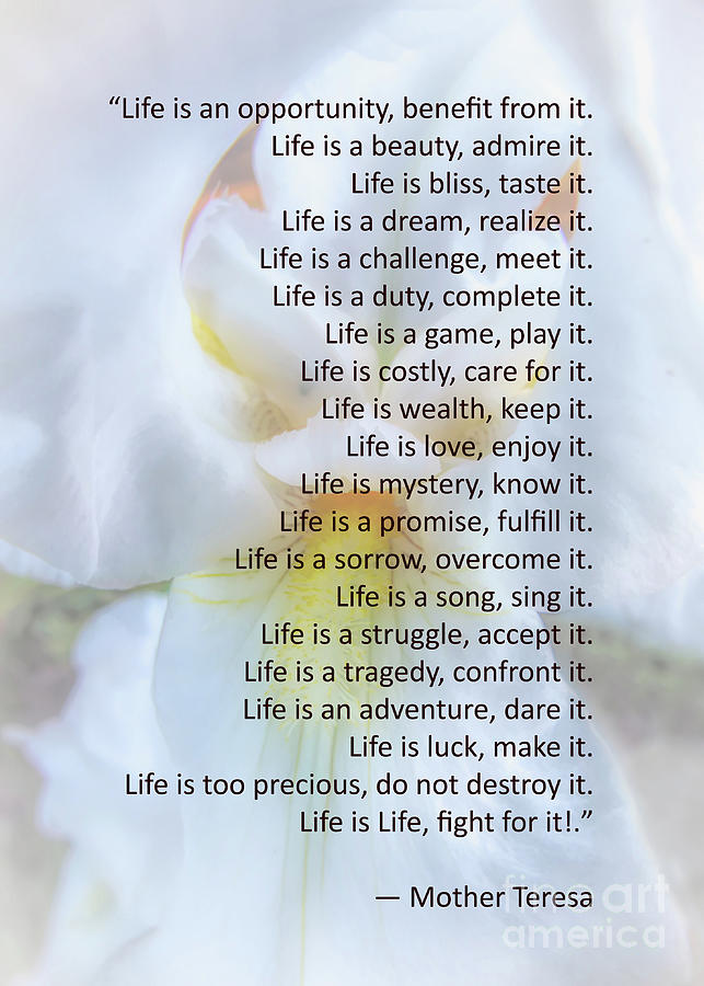 Life Is An Opportunity by Amy Dundon