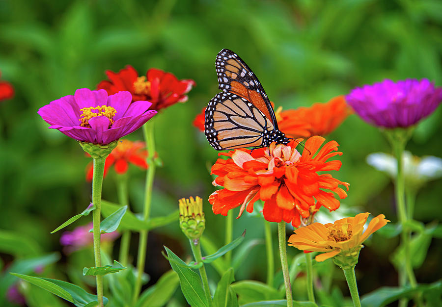 Life is Good in the Garden by Lynn Bauer