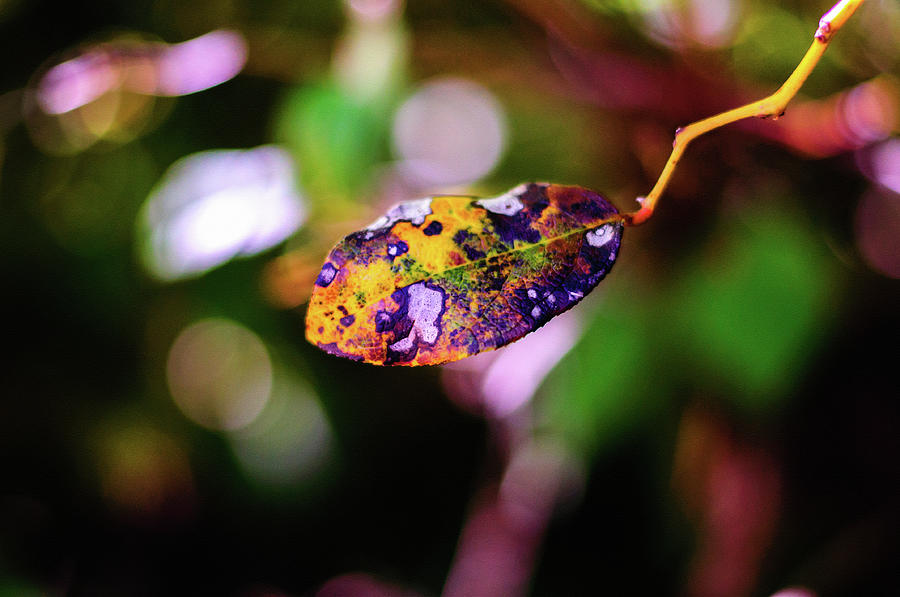 Life of a Leaf by Tikvah's Hope