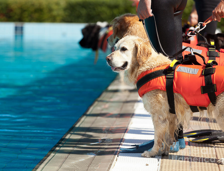Pets Photograph - Lifeguard Dog, Rescue Demonstration by Antonio Gravante